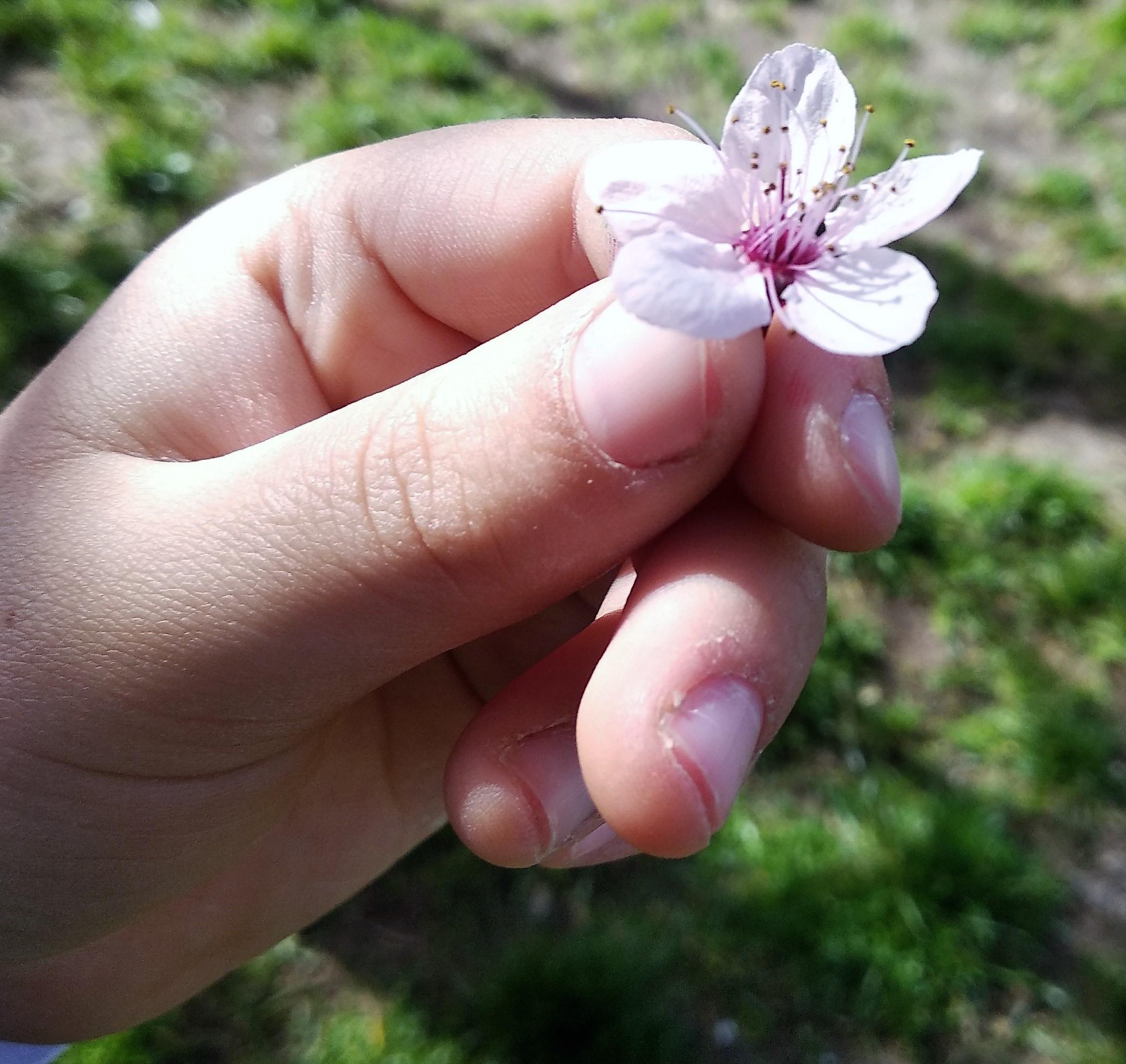 Mano di bimbo porge un fiore